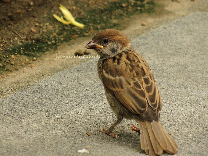 baby sparrow jul 2015